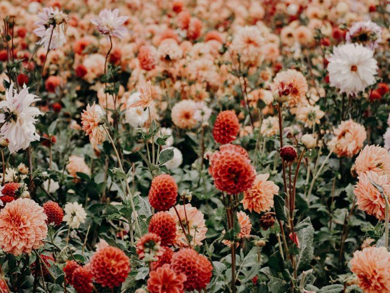 Nebojte sa kvetinových motívov. 4 spôsoby, ako ich správne umiestniť